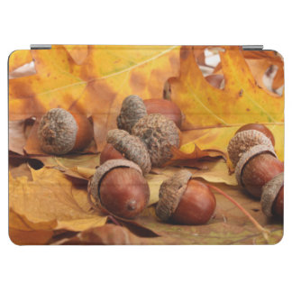 Brown Acorns On Autumn Leaves, Close Up iPad Air Cover