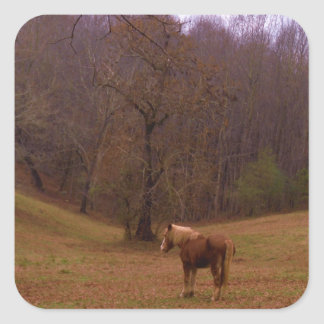 Brown and Blond Horse in a field Sticker