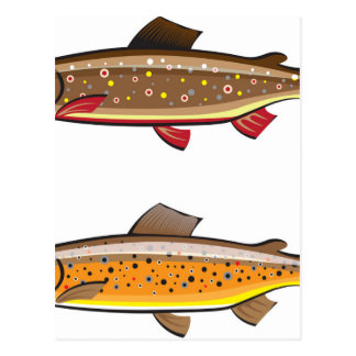 Brown and brook trout postcard