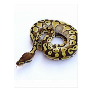 Brown and Gold Ball Python 2 Post Card