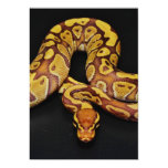 "Brown and Gold Ball Python 5"" X 7"" Invitation Card"