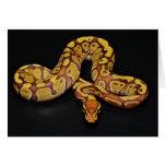 Brown and Gold Ball Python Card