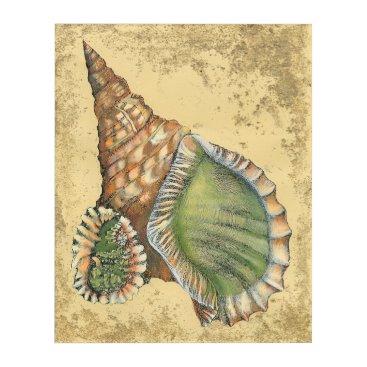 Beach Themed Brown and Green Seashell Acrylic Print