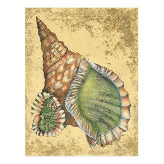 Brown and Green Seashell Postcard