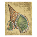 Brown and Green Seashell Poster