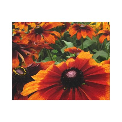 Brown and Orange Rudbeckia Flowers Canvas Print