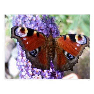 Brown and purple butterfly purple flowers postcard
