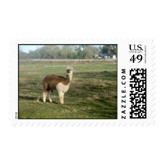 Brown and white alpaca postage stamp