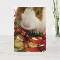 Brown and White Baby Guinea Pig With Bells Holiday Card