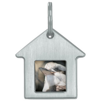 brown and white bird head view pet name tag