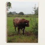 "Brown and white bull. planner<br><div class=""desc"">Taken in a farmers field in a village close by.</div>"