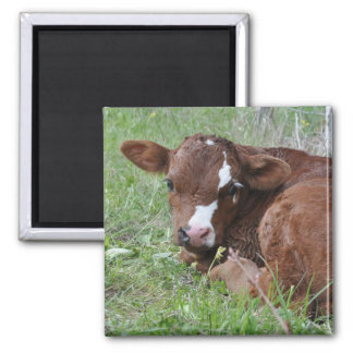 brown and white calf magnet