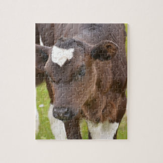Brown and White Calf Puzzles