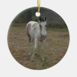 Brown and White Colt Christmas Tree Ornament