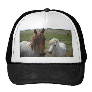 Brown_And_White_Face_Horses, _ Gorras De Camionero