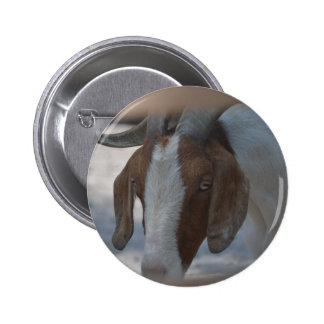 brown and white goat pinback button