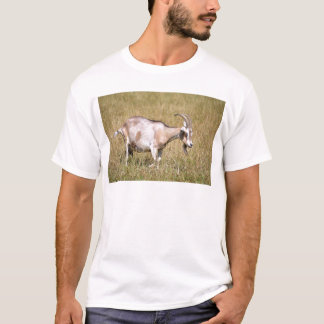 Brown and white goat in grass T-Shirt