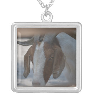 brown and white goat personalized necklace