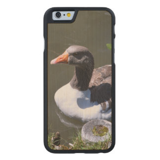 Brown and White Goose Carved Maple iPhone 6 Slim Case
