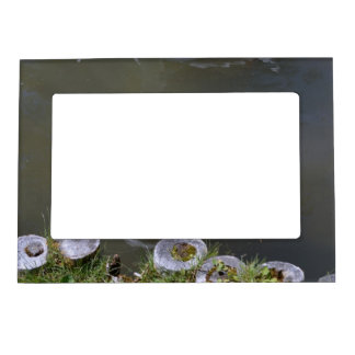 Brown and White Goose Magnetic Frame