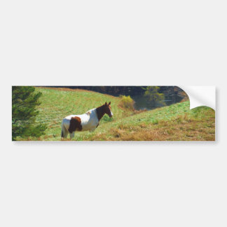Brown and white horse by autumn trees bumper sticker