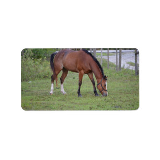brown and white horse grazing equine animal address label