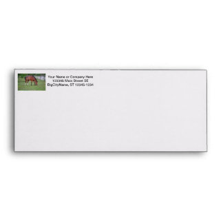 brown and white horse grazing equine animal envelope