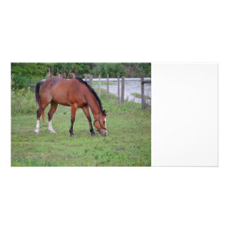 brown and white horse grazing equine animal photo card