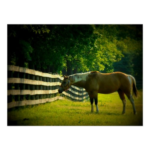 Brown and White horse grazing Posters