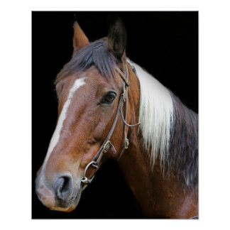 Brown and white horse poster
