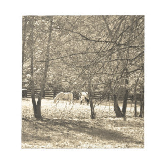 Brown  and white Horsess in tree. Sepia Tone Note Pads
