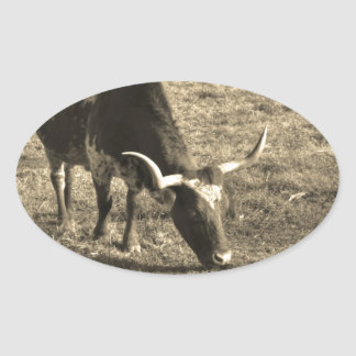 Brown and White Longhorn Bull   White and Brown ca Oval Stickers