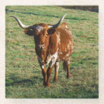 Brown and white longhorn Cow Glass Coaster