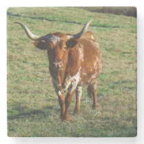 Brown and white longhorn Cow Stone Coaster
