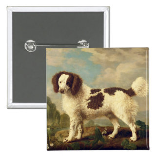 Brown and White Norfolk or Water Spaniel, 1778 (oi Button