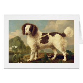 Brown and White Norfolk or Water Spaniel, 1778 (oi Card