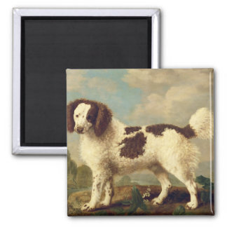 Brown and White Norfolk or Water Spaniel, 1778 (oi Magnet