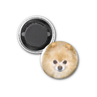 Brown and White Pomeranian Dog Magnet