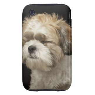 Brown and white Shih Tzu with eyes closed iPhone 3 Tough Case