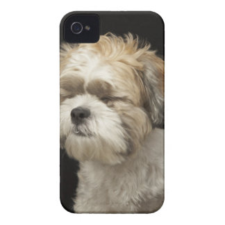 Brown and white Shih Tzu with eyes closed iPhone 4 Cover