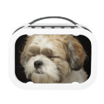 Brown and white Shih Tzu with eyes closed Yubo Lunchboxes