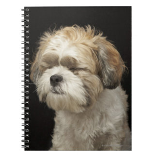 Brown and white Shih Tzu with eyes closed Notebook