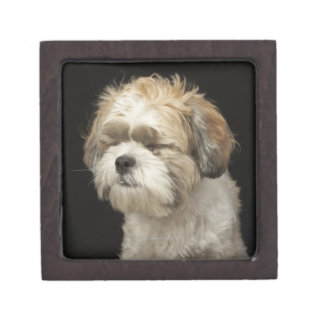 Brown and white Shih Tzu with eyes closed Premium Keepsake Box