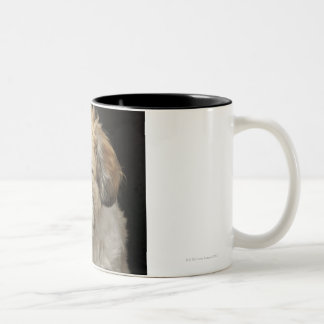 Brown and white Shih Tzu with eyes closed Two-Tone Coffee Mug