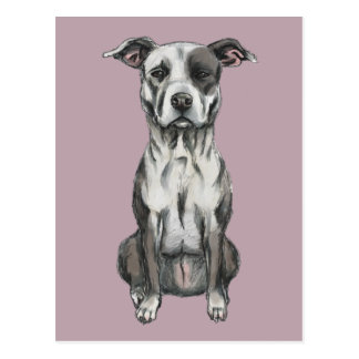 Brown and White Sitting Pit Bull Rendering Postcard