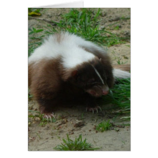 Brown and White Skunk Greeting Card