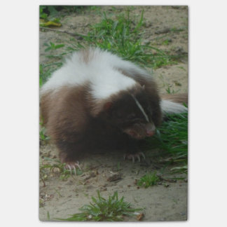 Brown and White Skunk Post-it® Notes