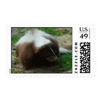 Brown and White Skunk Postage Stamp