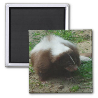 Brown and White Skunk Square Magnet Refrigerator Magnet