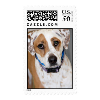 Brown and White Spotted Hound Mix Postage Stamps